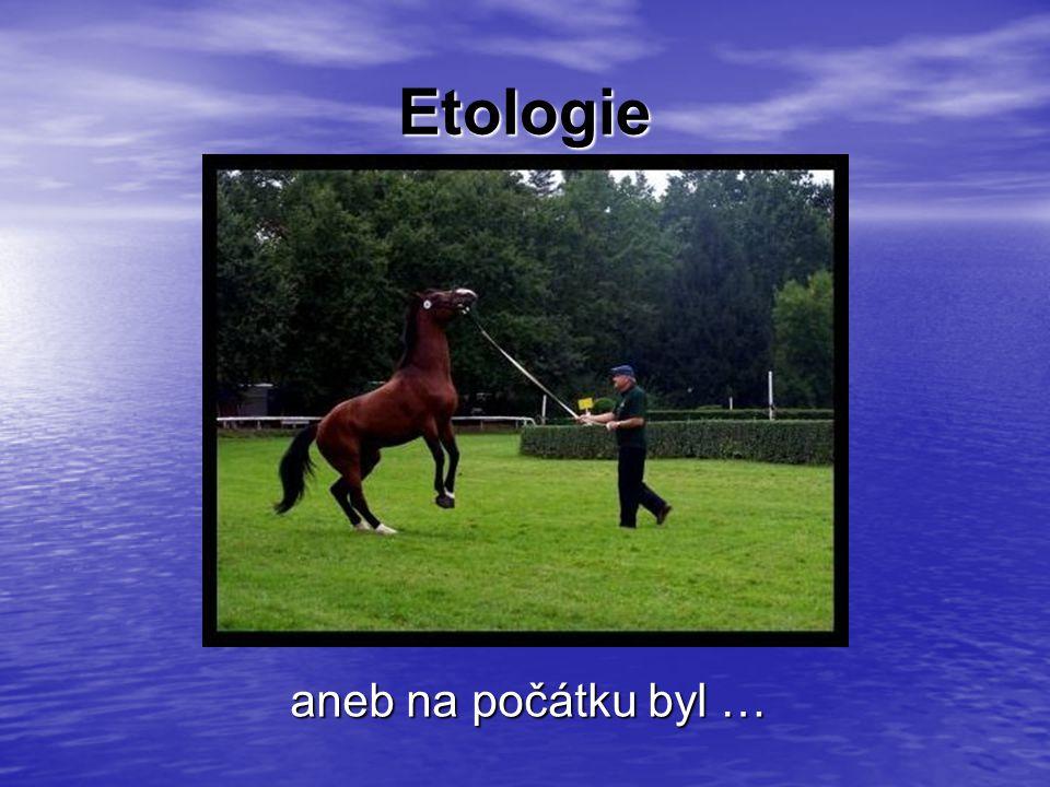 … kůň