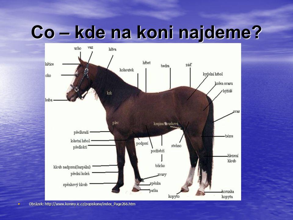Co – kde na koni najdeme? Obrázek: http://www.koniny.ic.cz/popiskone/index_Page266.htm Obrázek: http://www.koniny.ic.cz/popiskone/index_Page266.htm
