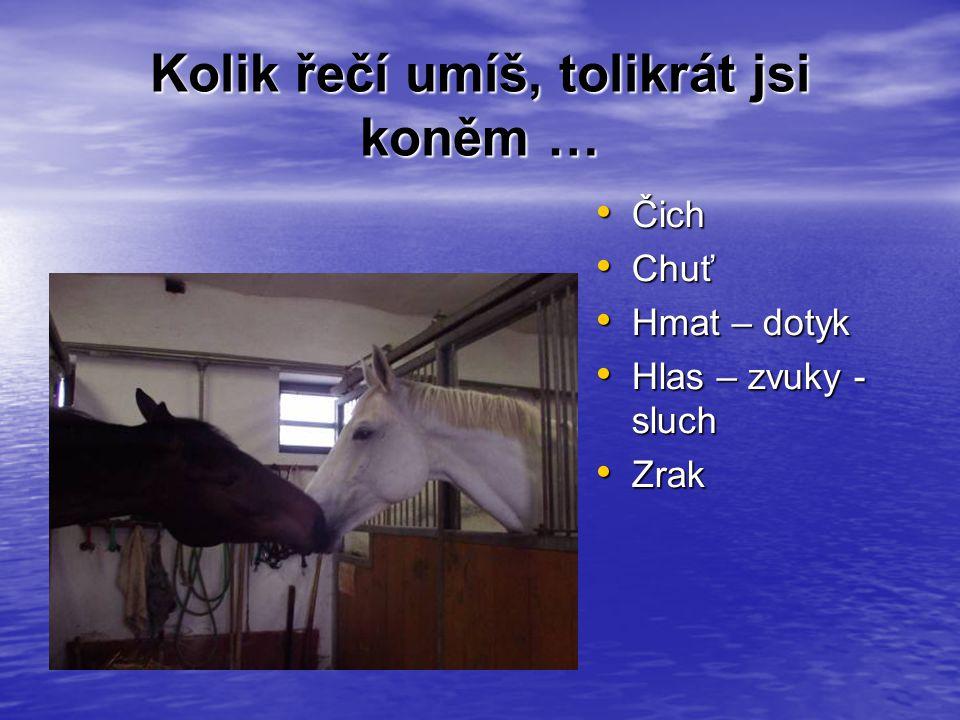 Obrázek: http://nd01.blog.cz/572/033/c3c17a48fa_49642101_o2.jpg