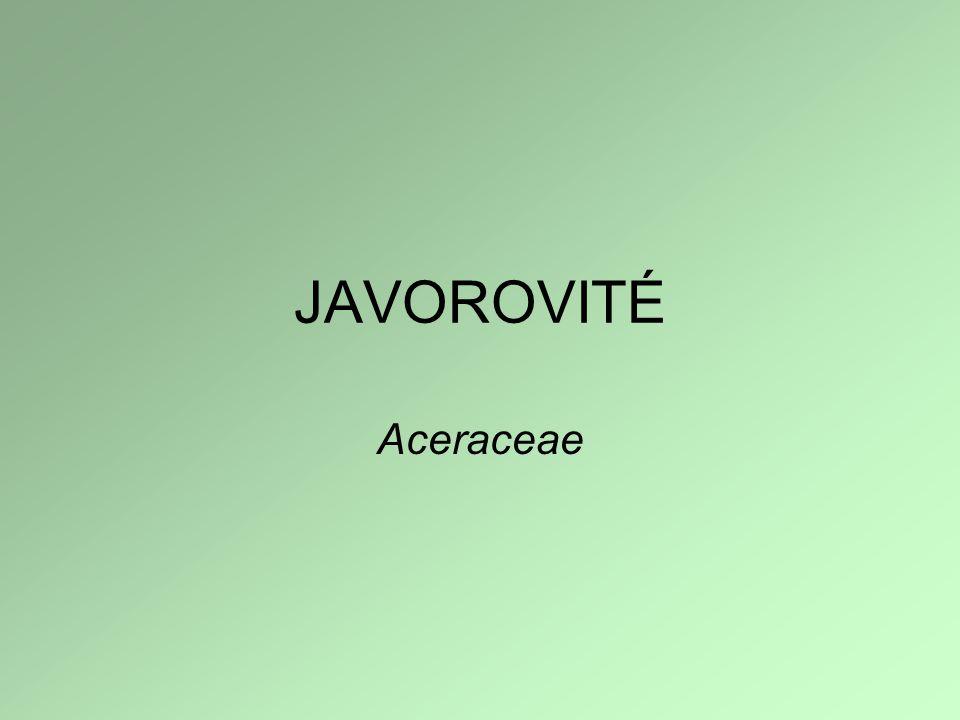 JAVOROVITÉ Aceraceae