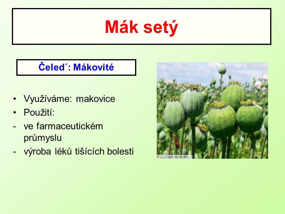 Mák setý Využíváme: makovice Použití: -ve farmaceutickém průmyslu -výroba léků tišících bolesti Čeled´: Mákovité
