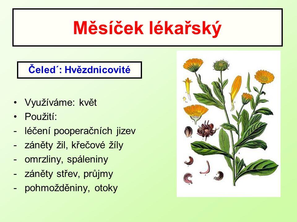 Měsíček lékařský Využíváme: květ Použití: -léčení pooperačních jizev -záněty žil, křečové žíly -omrzliny, spáleniny -záněty střev, průjmy -pohmožděnin