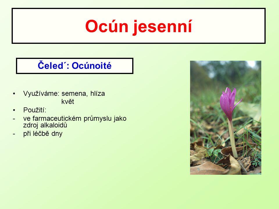 Ocún jesenní Využíváme: semena, hlíza květ Použití: -ve farmaceutickém průmyslu jako zdroj alkaloidů -při léčbě dny Čeled´: Ocúnoité