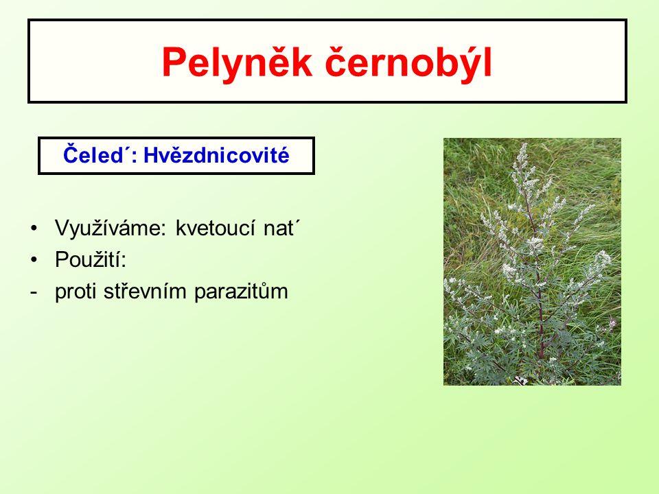 Pelyněk černobýl Využíváme: kvetoucí nat´ Použití: -proti střevním parazitům Čeled´: Hvězdnicovité
