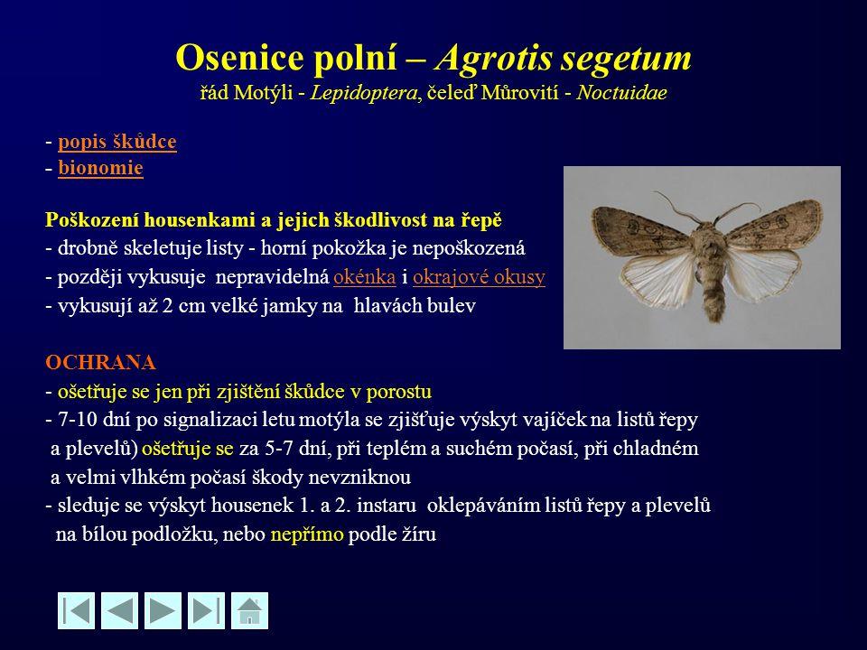 Osenice polní – Agrotis segetum řád Motýli - Lepidoptera, čeleď Můrovití - Noctuidae - popis škůdcepopis škůdce - bionomiebionomie Poškození housenkam