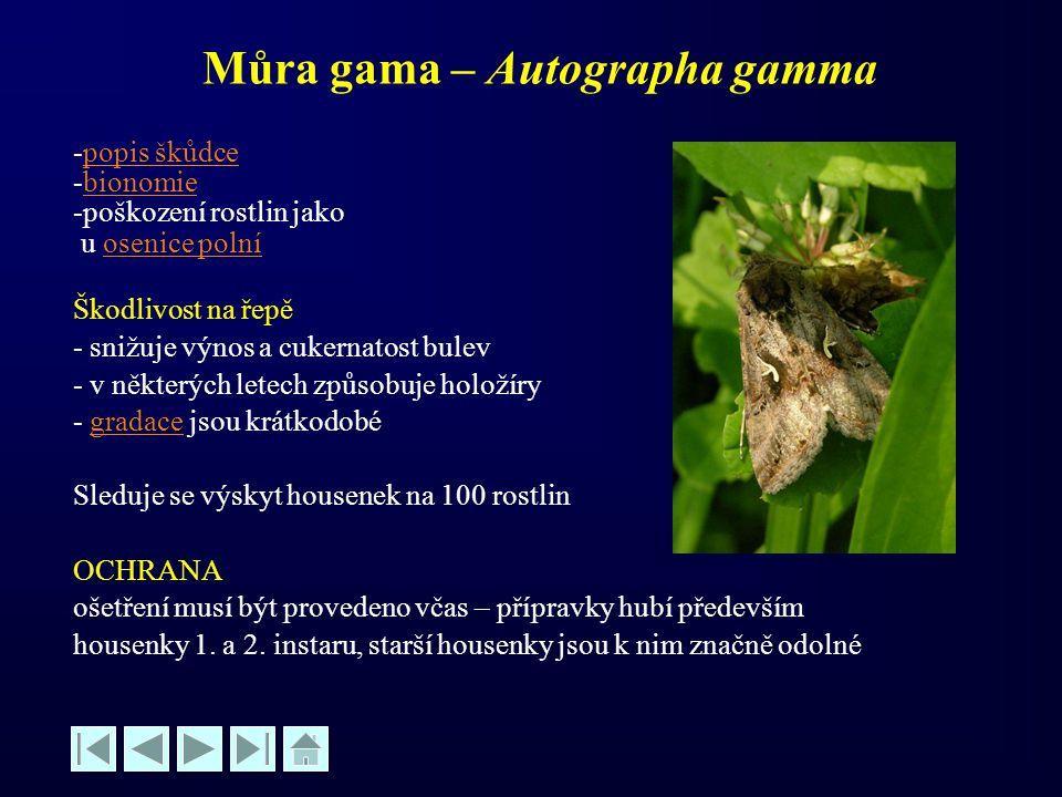 Můra gama – Autographa gamma -popis škůdcepopis škůdce -bionomiebionomie -poškození rostlin jako u osenice polníosenice polní Škodlivost na řepě - sni