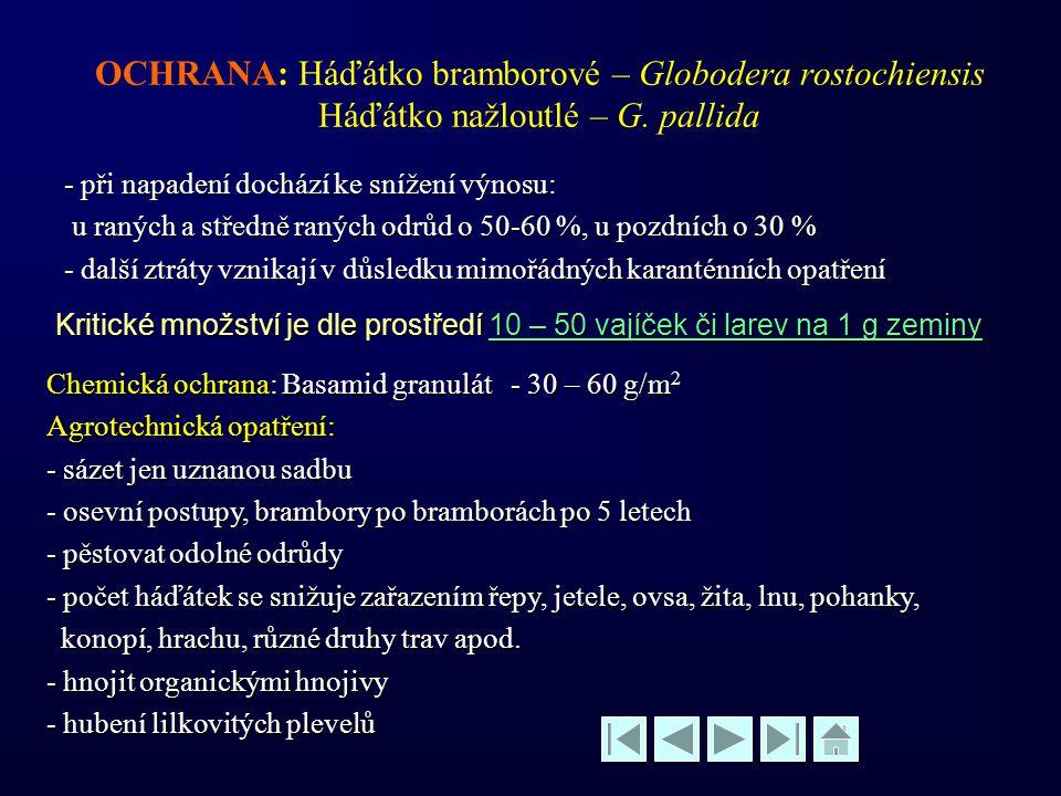 OCHRANA: Háďátko bramborové – Globodera rostochiensis Háďátko nažloutlé – G. pallida - při napadení dochází ke snížení výnosu: u raných a středně raný