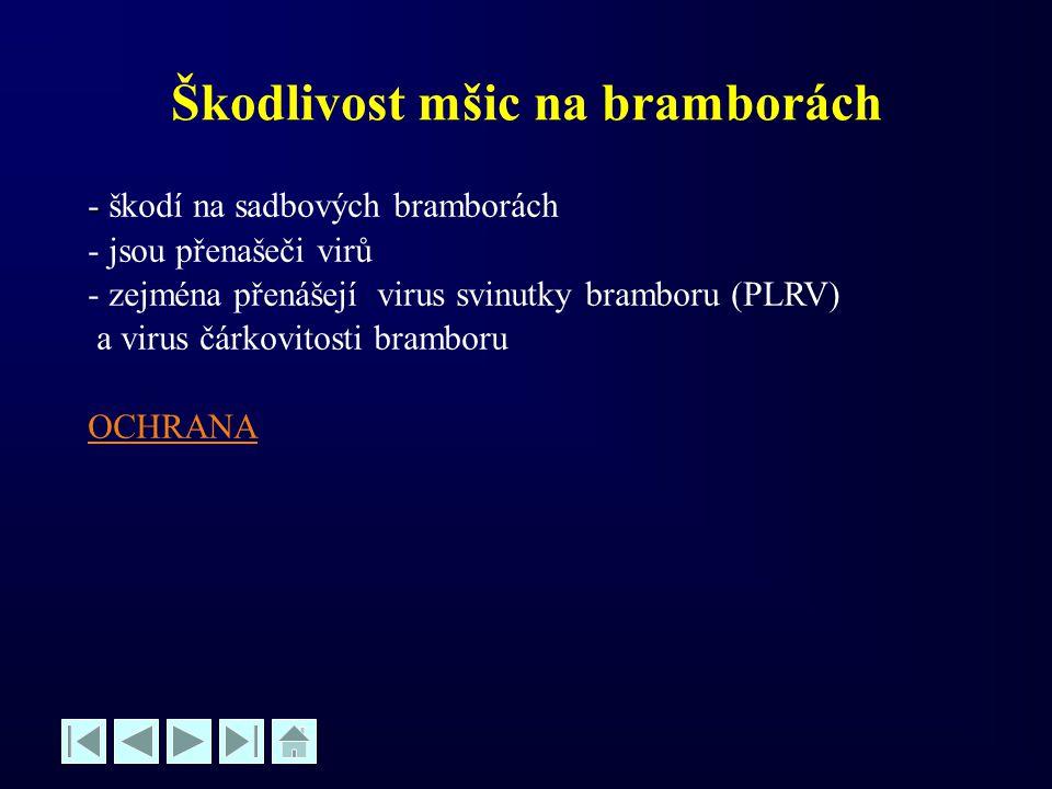 Škodlivost mšic na bramborách - - škodí na sadbových bramborách - jsou přenašeči virů - zejména přenášejí virus svinutky bramboru (PLRV) a virus čárko