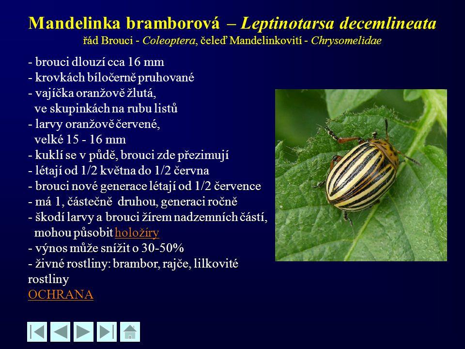 Mandelinka bramborová – Leptinotarsa decemlineata řád Brouci - Coleoptera, čeleď Mandelinkovití - Chrysomelidae - brouci dlouzí cca 16 mm - krovkách b