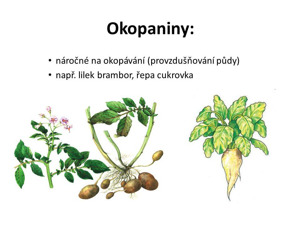 Okopaniny: náročné na okopávání (provzdušňování půdy) např. lilek brambor, řepa cukrovka