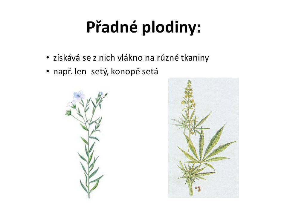 Přadné plodiny: získává se z nich vlákno na různé tkaniny např. len setý, konopě setá