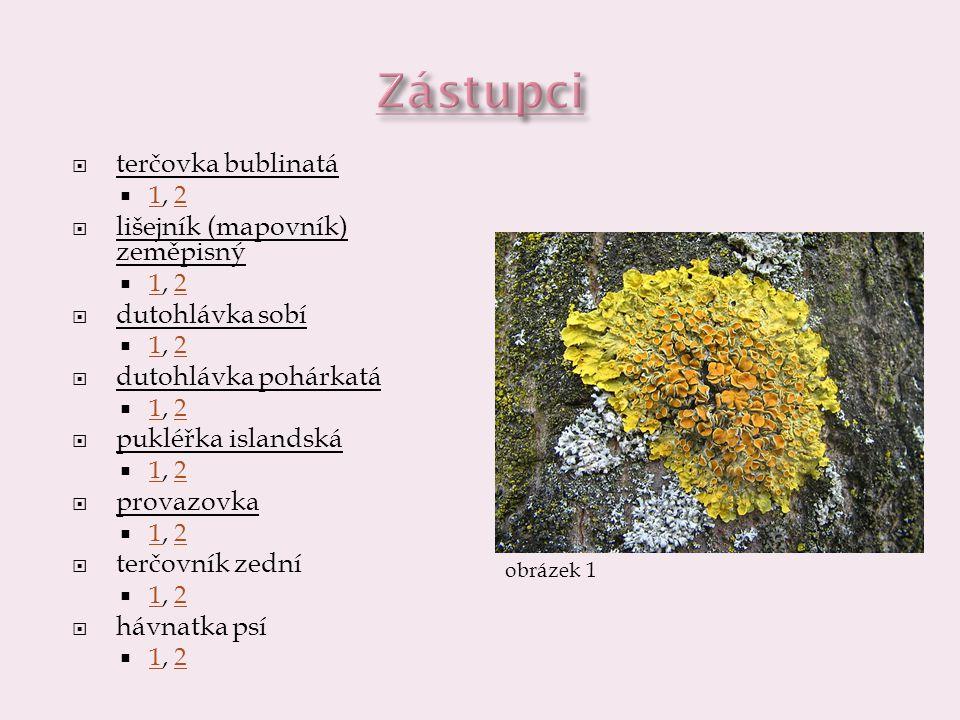  terčovka bublinatá  lišejník (mapovník) zeměpisný  dutohlávka sobí  pukléřka islandská  provazovka