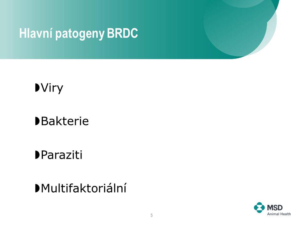 5  Viry  Bakterie  Paraziti  Multifaktoriální Hlavní patogeny BRDC