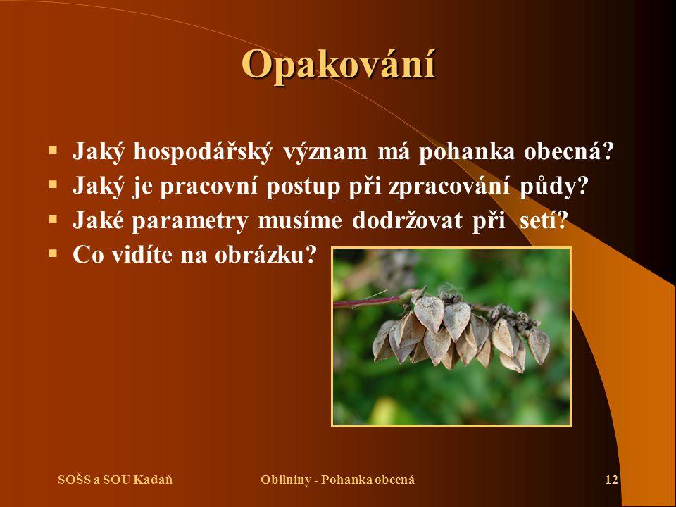 SOŠS a SOU KadaňObilniny - Pohanka obecná12 Opakování  Jaký hospodářský význam má pohanka obecná.