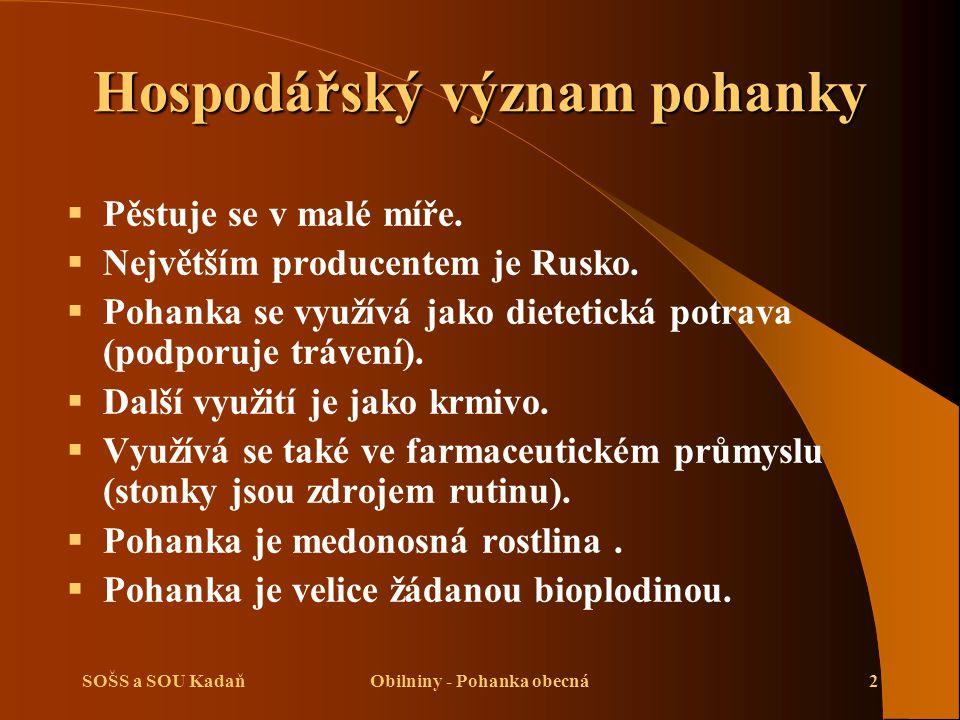 SOŠS a SOU KadaňObilniny - Pohanka obecná2 Hospodářský význam pohanky  Pěstuje se v malé míře.