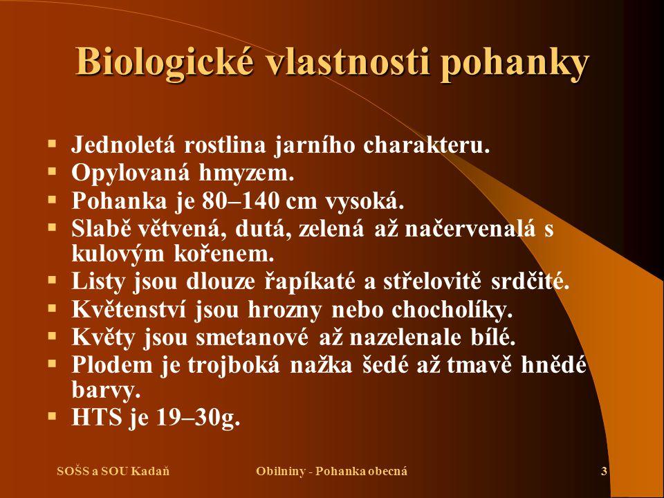 SOŠS a SOU KadaňObilniny - Pohanka obecná3 Biologické vlastnosti pohanky  Jednoletá rostlina jarního charakteru.