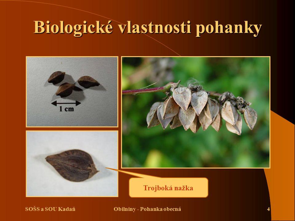 SOŠS a SOU KadaňObilniny - Pohanka obecná4 Biologické vlastnosti pohanky Trojboká nažka