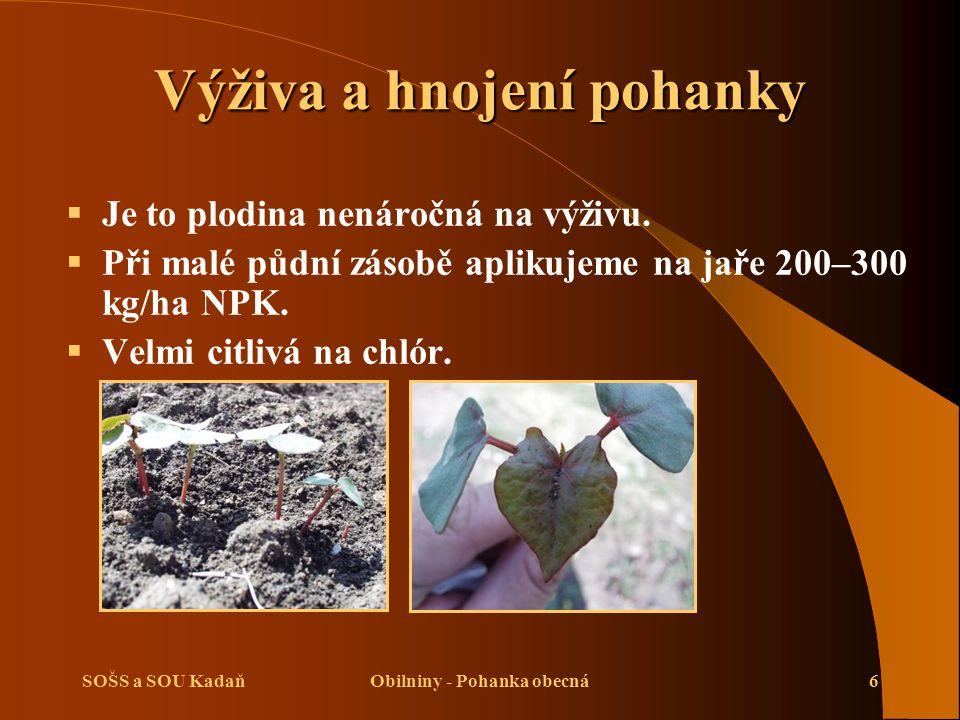 SOŠS a SOU KadaňObilniny - Pohanka obecná6 Výživa a hnojení pohanky  Je to plodina nenáročná na výživu.