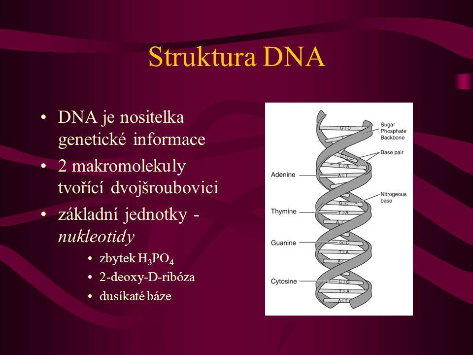 Struktura DNA DNA je nositelka genetické informace 2 makromolekuly tvořící dvojšroubovici základní jednotky - nukleotidy zbytek H 3 PO 4 2-deoxy-D-ribóza dusíkaté báze