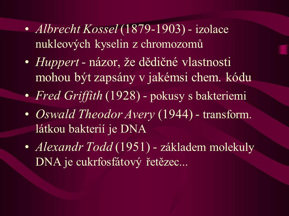 Albrecht Kossel (1879-1903) - izolace nukleových kyselin z chromozomů Huppert - názor, že dědičné vlastnosti mohou být zapsány v jakémsi chem.