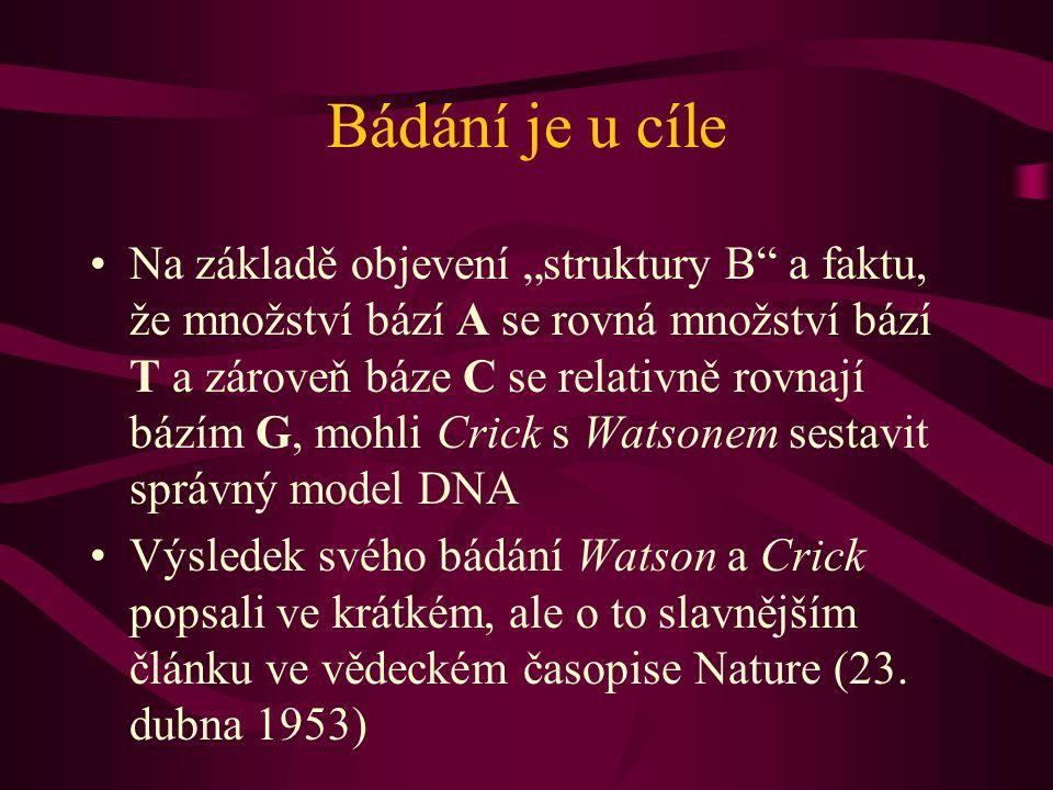 """Bádání je u cíle Na základě objevení """"struktury B a faktu, že množství bází A se rovná množství bází T a zároveň báze C se relativně rovnají bázím G, mohli Crick s Watsonem sestavit správný model DNA Výsledek svého bádání Watson a Crick popsali ve krátkém, ale o to slavnějším článku ve vědeckém časopise Nature (23."""