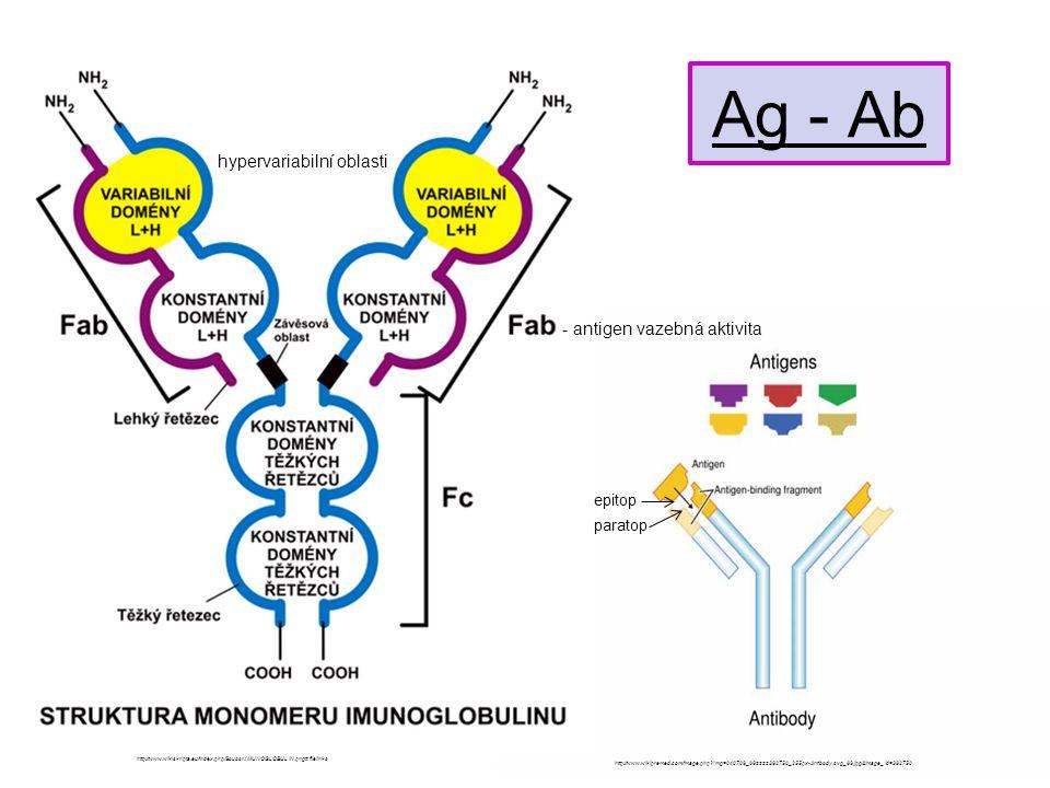 afinita ≠ avidita afinita - síla interakce mezi jedním paratopem a jedním epitopem avidita - závislá na afinitě - vazebná energie mezi komplexním antigenem a protilátkou - bere v úvahu valenci Ag a Ab