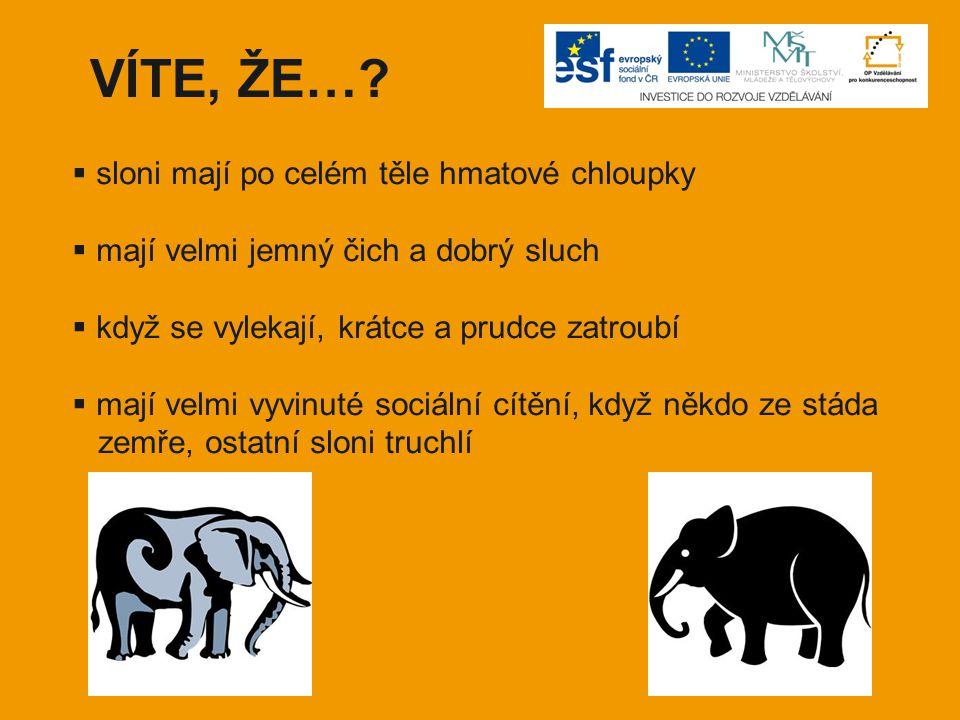 VÍTE, ŽE…?  sloni mají po celém těle hmatové chloupky  mají velmi jemný čich a dobrý sluch  když se vylekají, krátce a prudce zatroubí  mají velmi