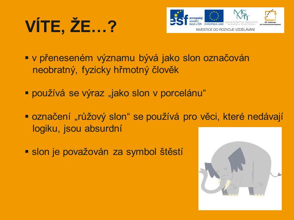 """VÍTE, ŽE…?  v přeneseném významu bývá jako slon označován neobratný, fyzicky hřmotný člověk  používá se výraz """"jako slon v porcelánu""""  označení """"rů"""