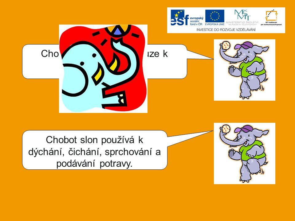 Chobot slon používá k dýchání, čichání, sprchování a podávání potravy. Chobot slon používá pouze k podávání potravy.