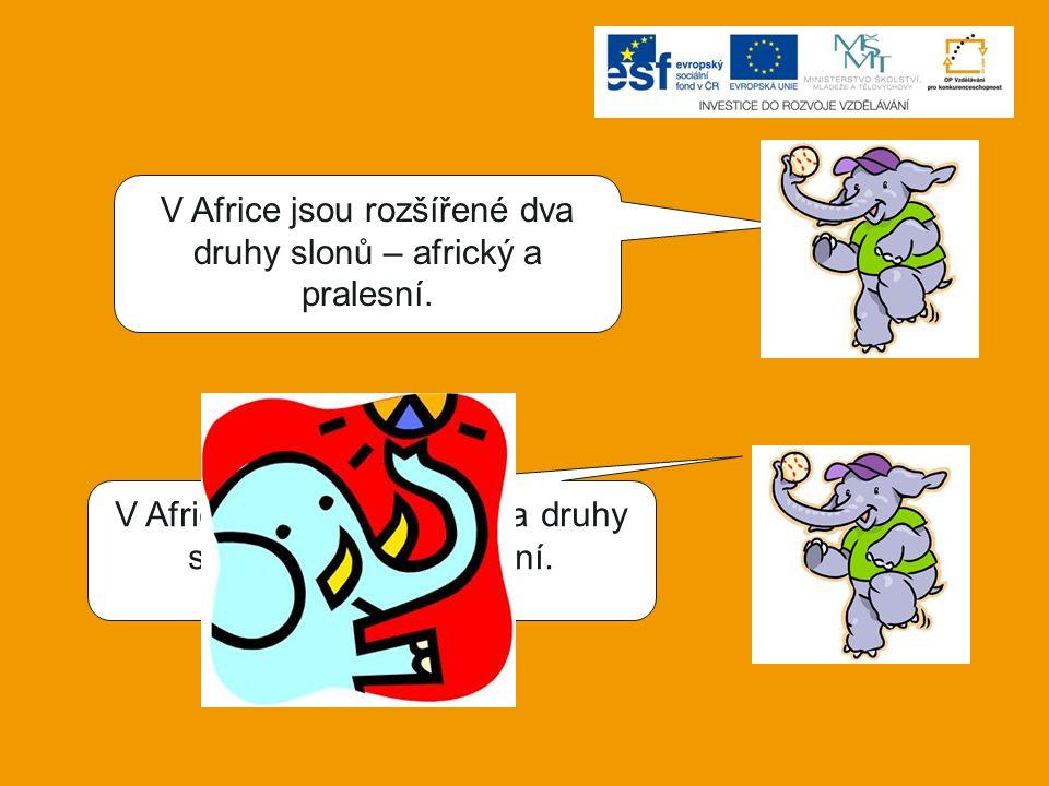 V Africe jsou rozšířené dva druhy slonů – africký a pralesní. V Africe jsou rozšířené dva druhy slonů – africký a stepní.