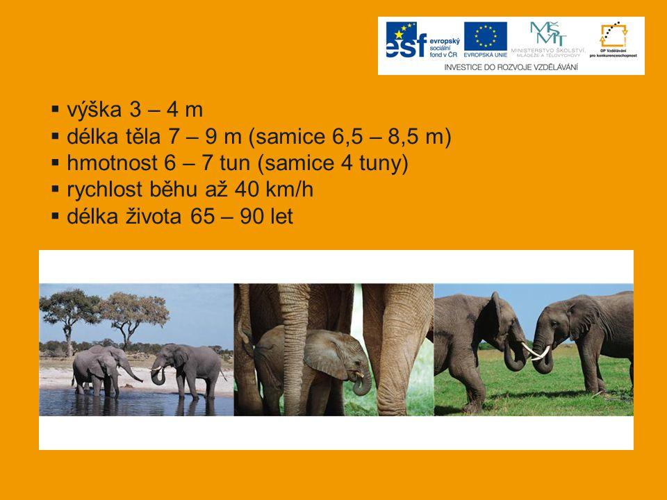  výška 3 – 4 m  délka těla 7 – 9 m (samice 6,5 – 8,5 m)  hmotnost 6 – 7 tun (samice 4 tuny)  rychlost běhu až 40 km/h  délka života 65 – 90 let