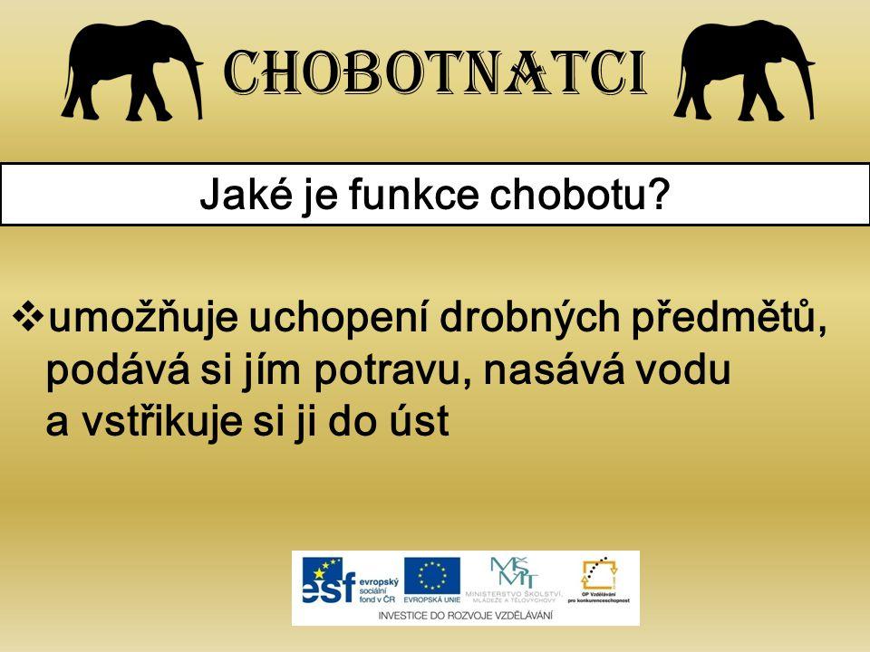 Chobotnatci Jaké je funkce chobotu.
