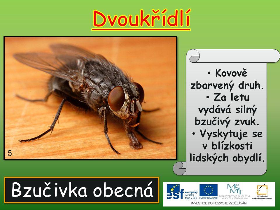 Velmi malá moucha.Hojně se vyskytuje na kvasícím ovoci, marmeládách a ovocných šťávách.