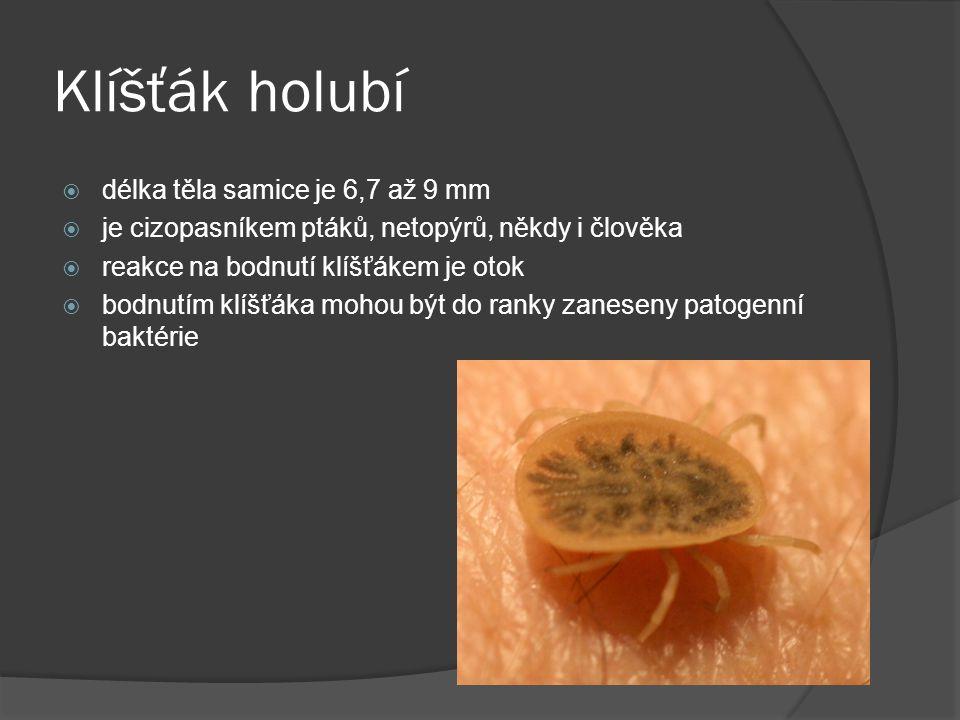 Čmelík kuří  parazit ptáků, může napadat i savce a člověka  velikost – 0,8 mm  saje krev  přenáší onemocnění (encefalitida)  bodnutí člověka není příliš bolestivé, ale způsobuje nepřiměřeně velkou místní alergickou reakci