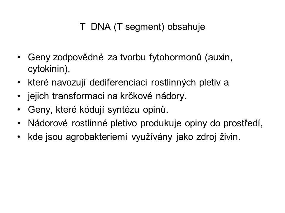 T DNA (T segment) obsahuje Geny zodpovědné za tvorbu fytohormonů (auxin, cytokinin), které navozují dediferenciaci rostlinných pletiv a jejich transfo