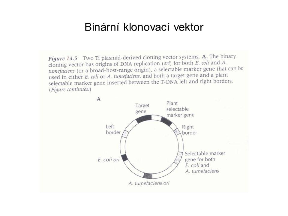 Binární klonovací vektor