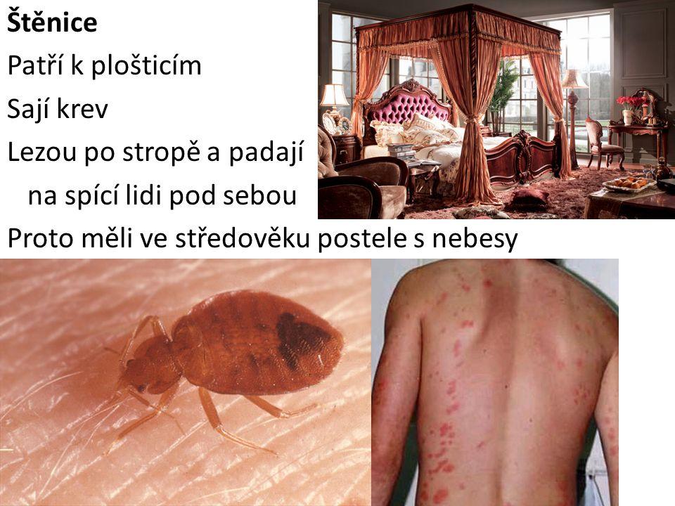 Štěnice Patří k plošticím Sají krev Lezou po stropě a padají na spící lidi pod sebou Proto měli ve středověku postele s nebesy
