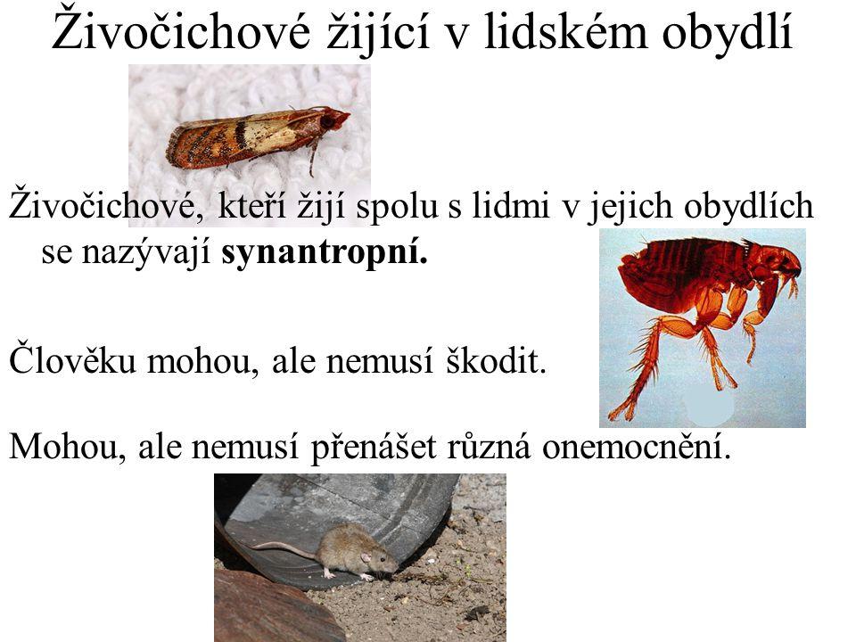 Rybenka Malý max 2mm velký hmyz Najdeme ho často v koupelnách a na záchodech Živí se drobnými org.