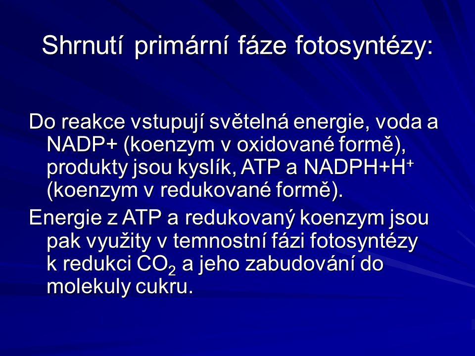 Shrnutí primární fáze fotosyntézy: Do reakce vstupují světelná energie, voda a NADP+ (koenzym v oxidované formě), produkty jsou kyslík, ATP a NADPH+H + (koenzym v redukované formě).