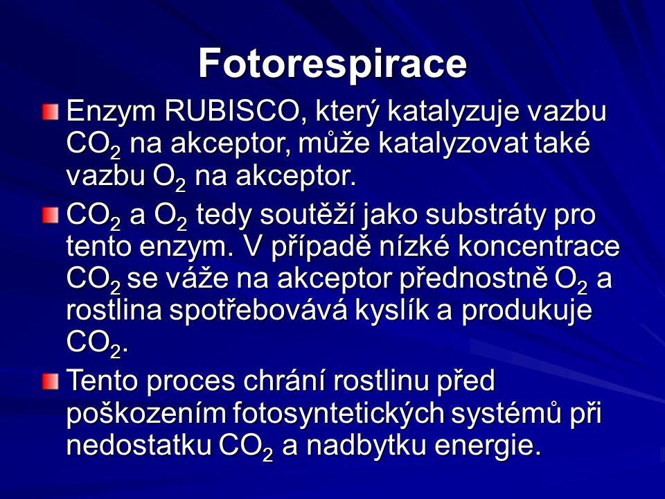 Fotorespirace Enzym RUBISCO, který katalyzuje vazbu CO 2 na akceptor, může katalyzovat také vazbu O 2 na akceptor.