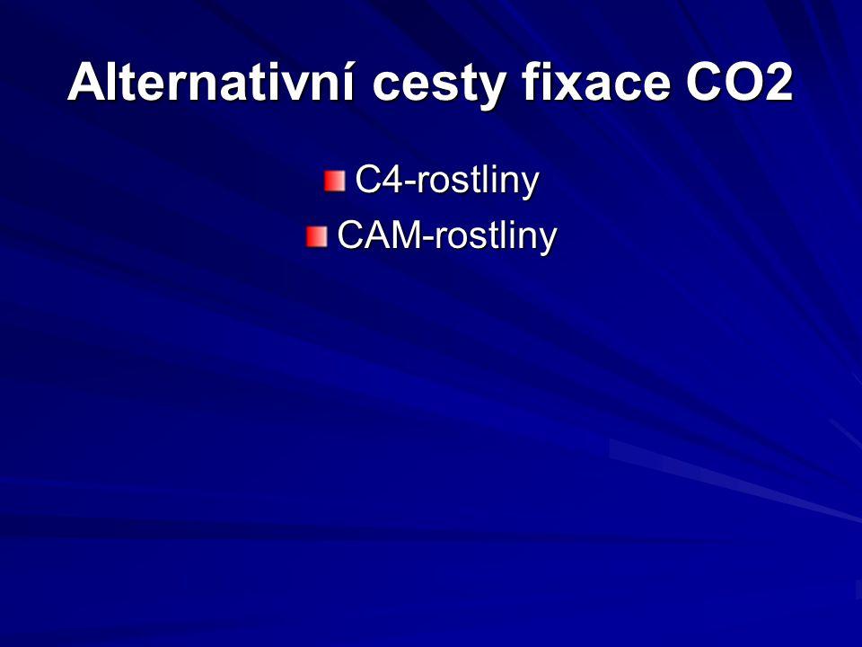 Alternativní cesty fixace CO2 C4-rostlinyCAM-rostliny