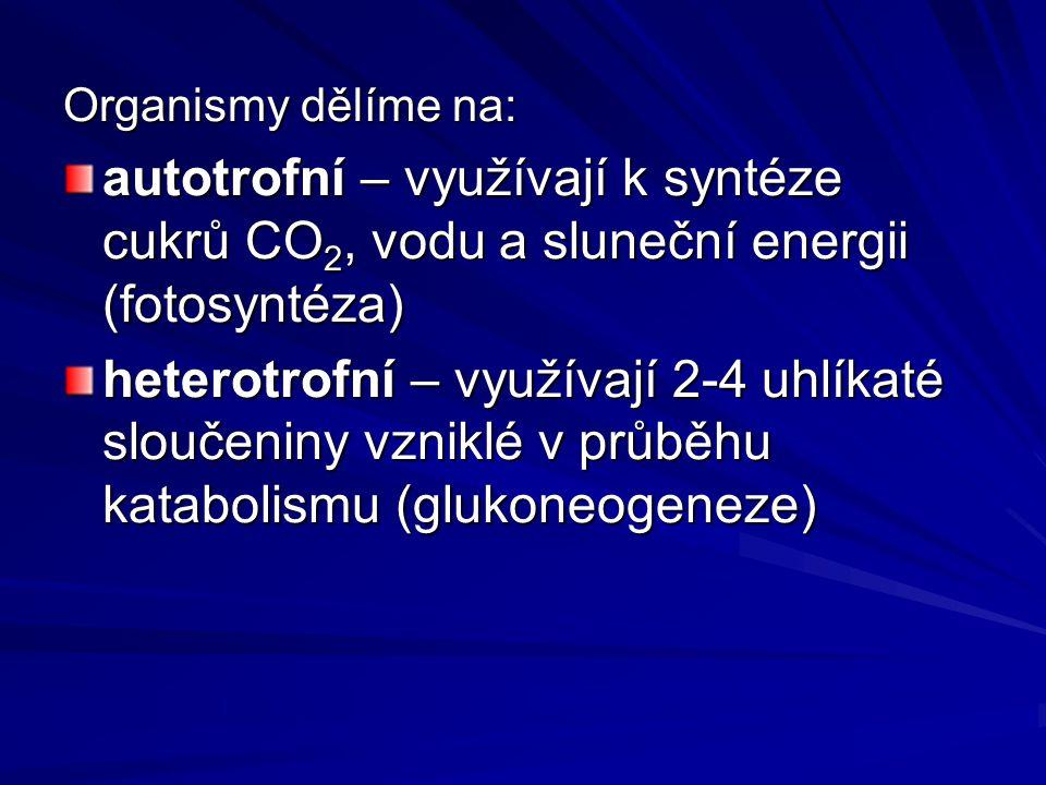 Organismy dělíme na: autotrofní – využívají k syntéze cukrů CO 2, vodu a sluneční energii (fotosyntéza) heterotrofní – využívají 2-4 uhlíkaté sloučeniny vzniklé v průběhu katabolismu (glukoneogeneze)