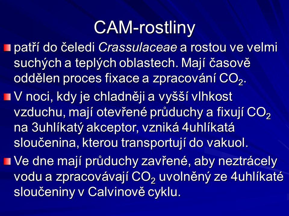 CAM-rostliny patří do čeledi Crassulaceae a rostou ve velmi suchých a teplých oblastech.