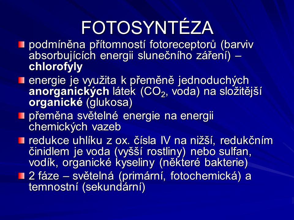 FOTOSYNTÉZA podmíněna přítomností fotoreceptorů (barviv absorbujících energii slunečního záření) – chlorofyly energie je využita k přeměně jednoduchých anorganických látek (CO 2, voda) na složitější organické (glukosa) přeměna světelné energie na energii chemických vazeb redukce uhlíku z ox.