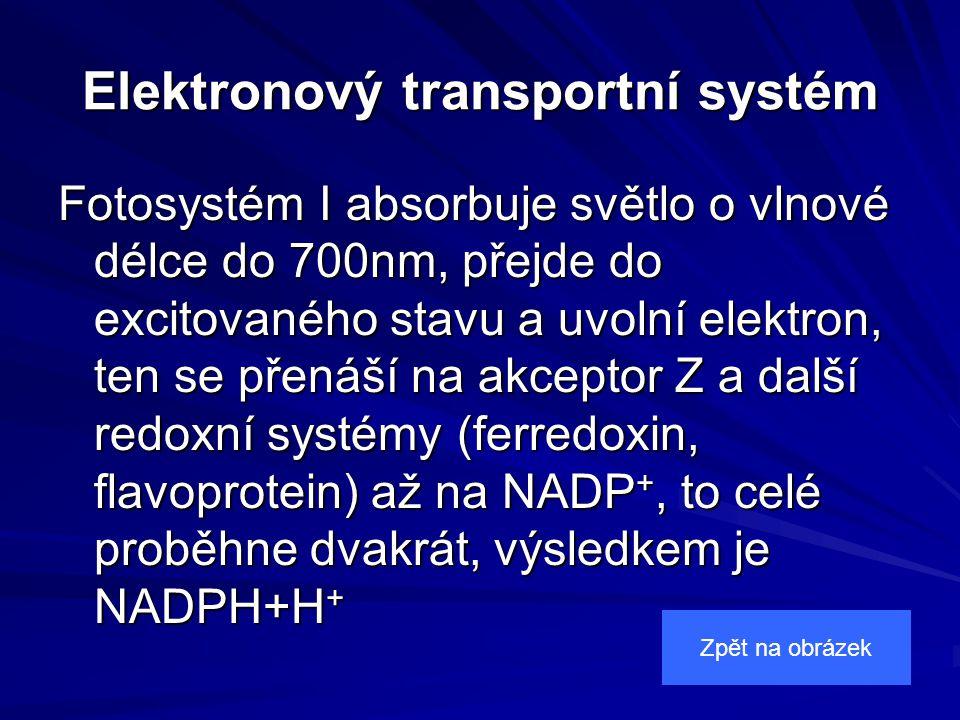 Elektronový transportní systém Fotosystém I absorbuje světlo o vlnové délce do 700nm, přejde do excitovaného stavu a uvolní elektron, ten se přenáší na akceptor Z a další redoxní systémy (ferredoxin, flavoprotein) až na NADP +, to celé proběhne dvakrát, výsledkem je NADPH+H + Zpět na obrázek