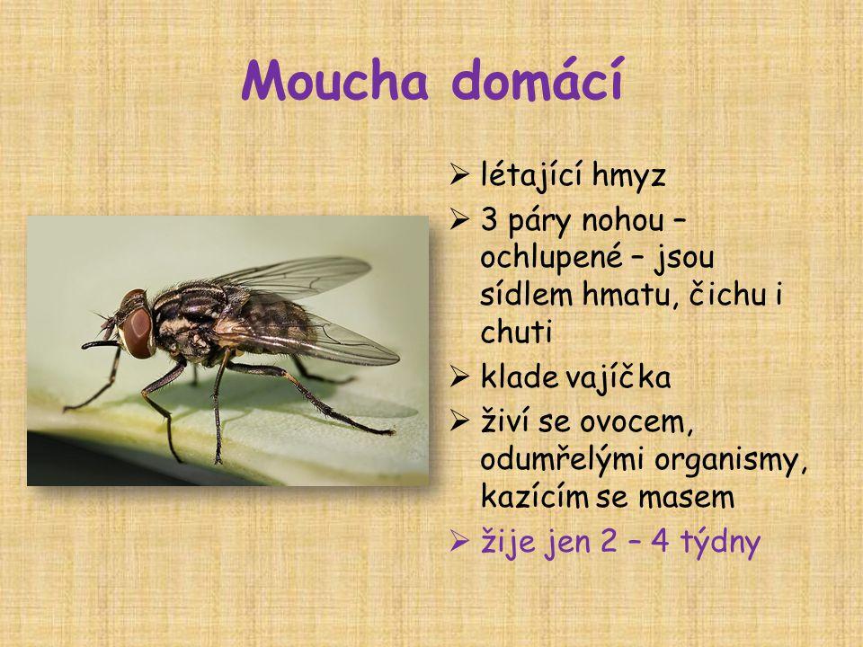 Moucha domácí  létající hmyz  3 páry nohou – ochlupené – jsou sídlem hmatu, čichu i chuti  klade vajíčka  živí se ovocem, odumřelými organismy, kazícím se masem  žije jen 2 – 4 týdny