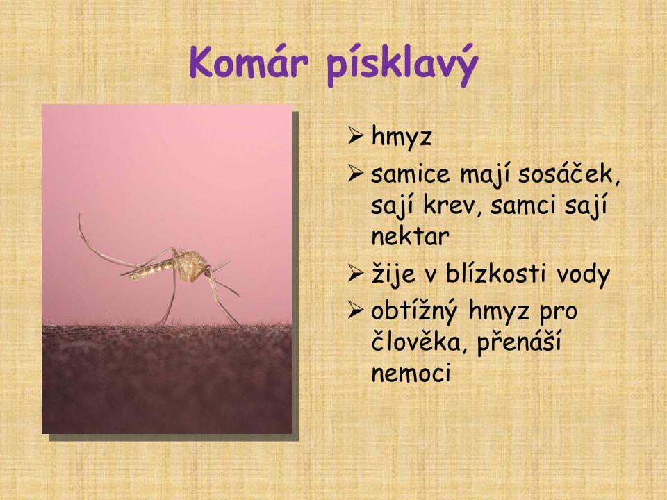 Komár písklavý  hmyz  samice mají sosáček, sají krev, samci sají nektar  žije v blízkosti vody  obtížný hmyz pro člověka, přenáší nemoci