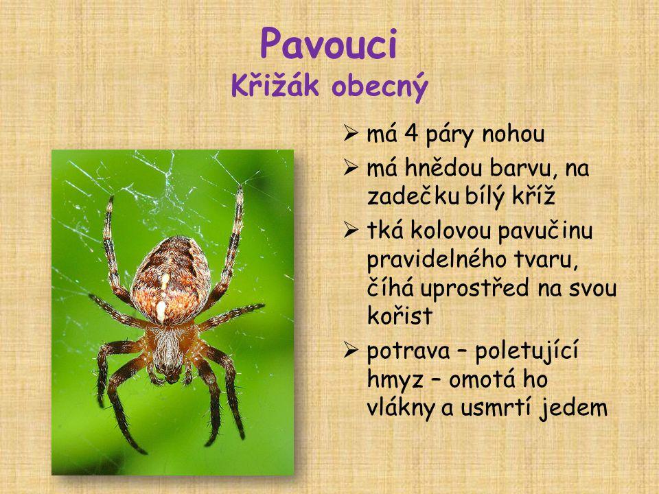 Pavouci Křižák obecný  má 4 páry nohou  má hnědou barvu, na zadečku bílý kříž  tká kolovou pavučinu pravidelného tvaru, číhá uprostřed na svou kořist  potrava – poletující hmyz – omotá ho vlákny a usmrtí jedem
