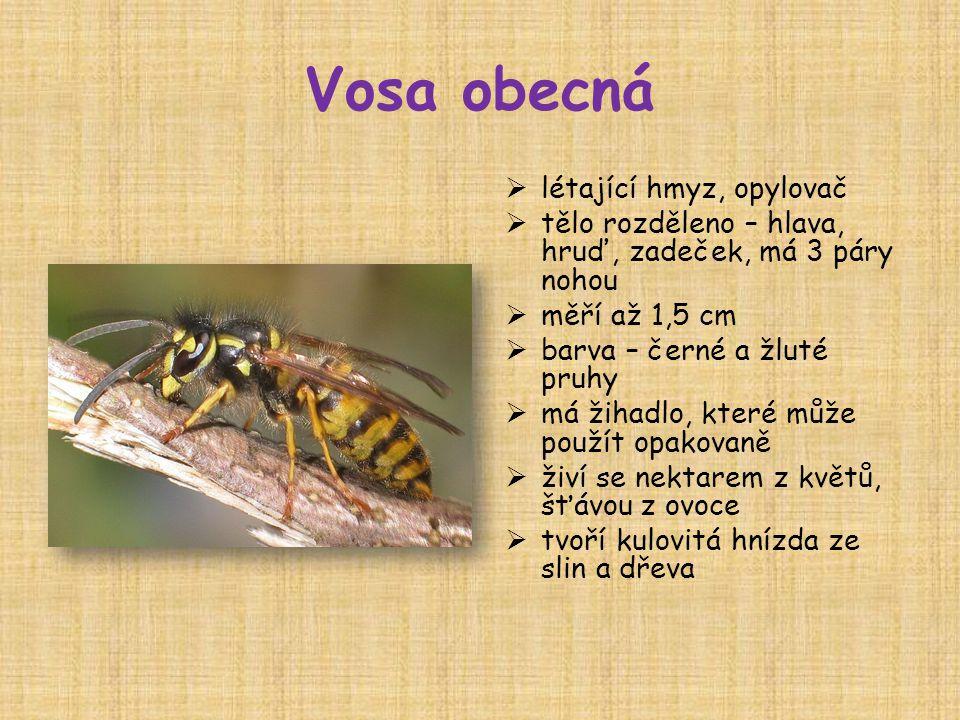 Vosa obecná  létající hmyz, opylovač  tělo rozděleno – hlava, hruď, zadeček, má 3 páry nohou  měří až 1,5 cm  barva – černé a žluté pruhy  má žihadlo, které může použít opakovaně  živí se nektarem z květů, šťávou z ovoce  tvoří kulovitá hnízda ze slin a dřeva