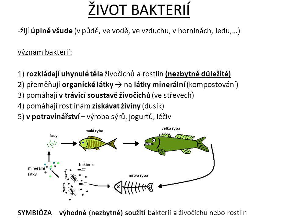 -žijí úplně všude (v půdě, ve vodě, ve vzduchu, v horninách, ledu,…) význam bakterií: 1) rozkládají uhynulé těla živočichů a rostlin (nezbytně důležit
